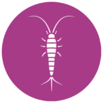 Silverfish Pest Control And Inspection Services