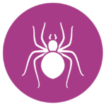 Spider Pest Control and Inspection Services