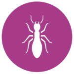 Termite Pest Control and Inspection Services