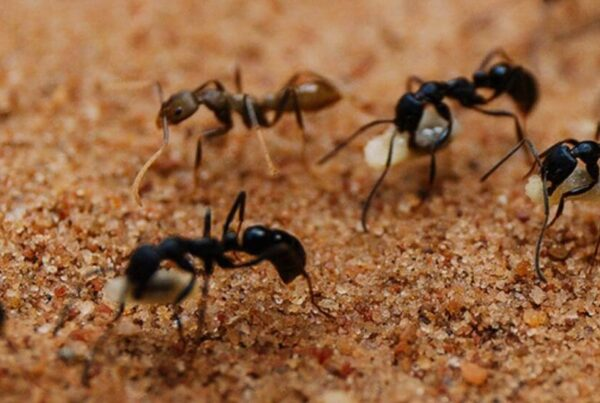 Ant Removal Treatment and Ant Pest Control Service in Melbourne