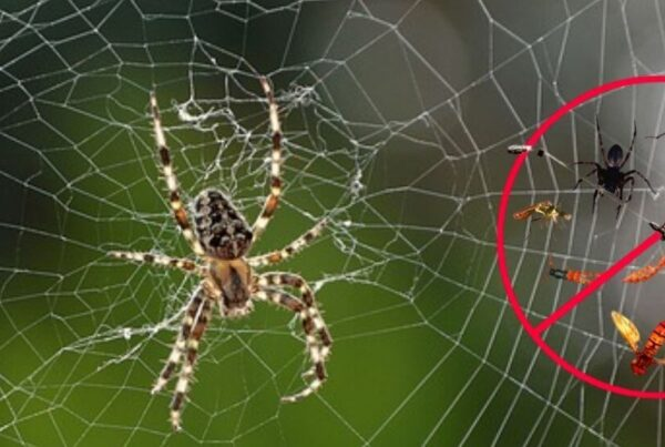 Spider Control Treatment and Spider Removal in Melbourne